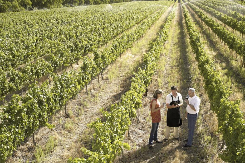 Firmarejse med besøg i vinmark i Frankring